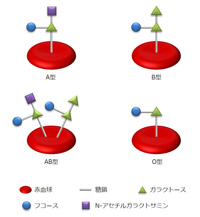 血液型の遺伝 - 遺伝子(SNP)の組み合わせと例外 -